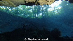 The world beyond - a cenote's view by Stephan Attwood 